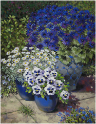 Senetti and Marguerites on the Terrace